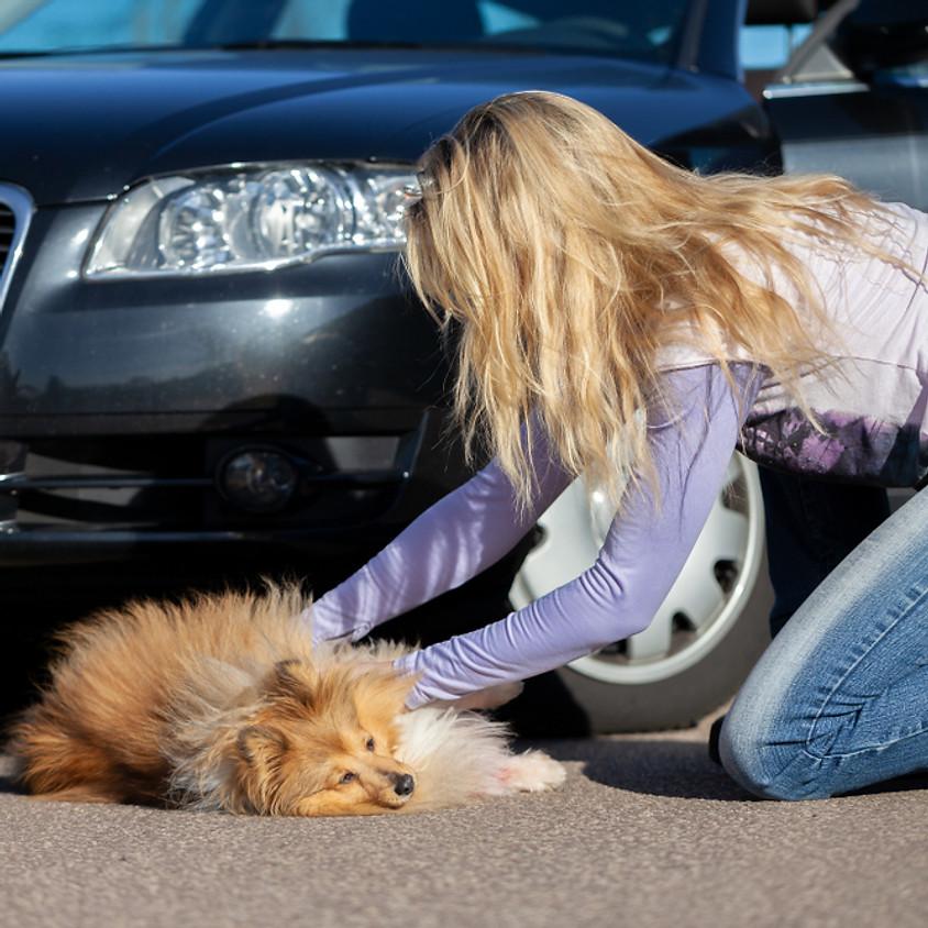 KURSUS - Førstehjælp for hundeejere