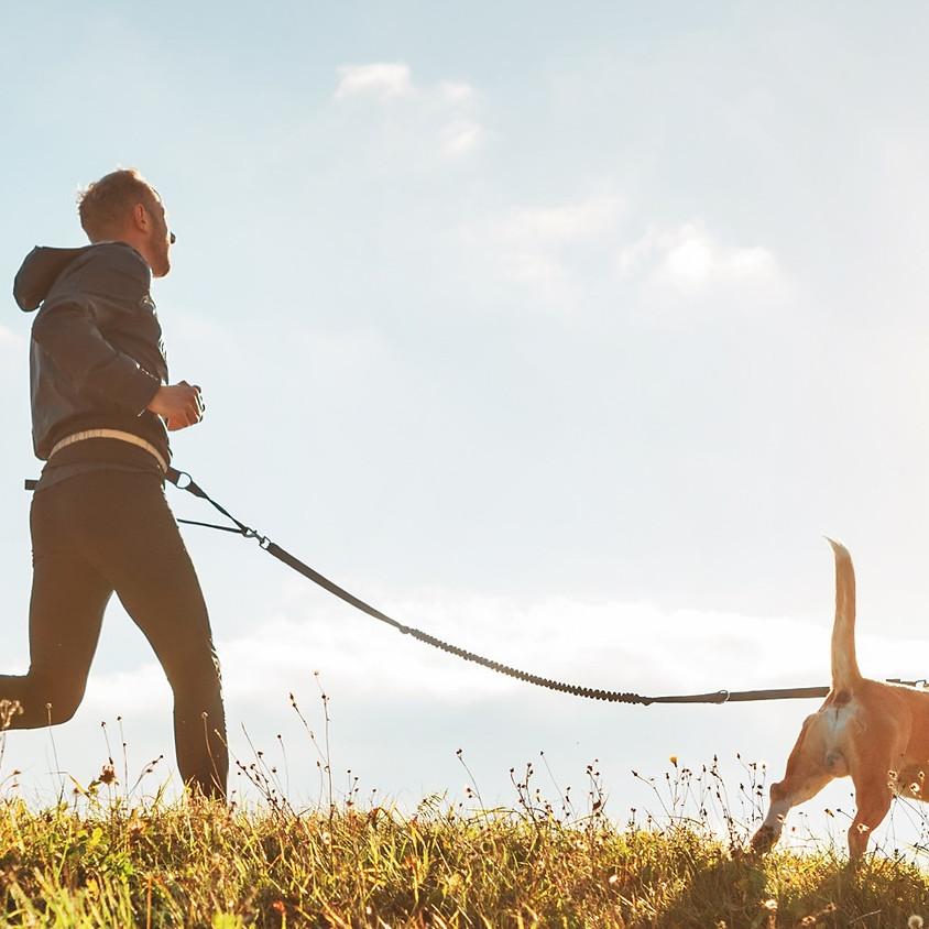 GRATIS FOREDRAG - Løb med din hund