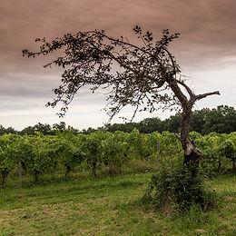 Vignes Domaine de Charron