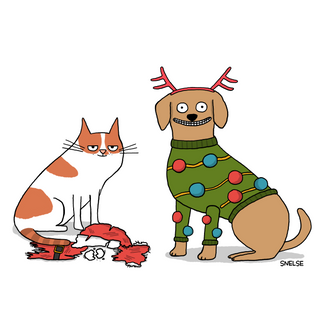 Cats vs Dogs at Christmas