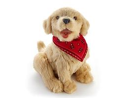 Puppy_14.jpg