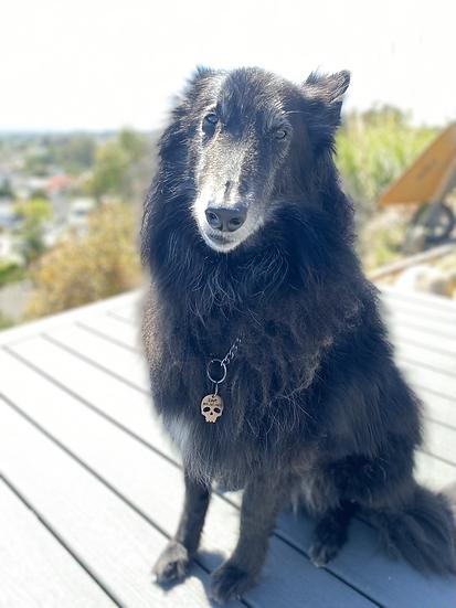 Pet Collar Tag - Customizable