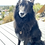 Thumbnail: Pet Collar Tag - Customizable
