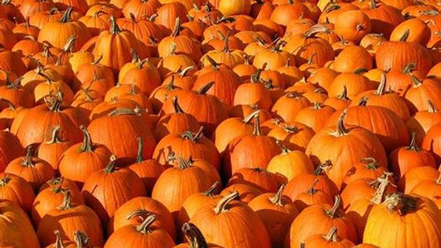 Giant Pumpkin Party