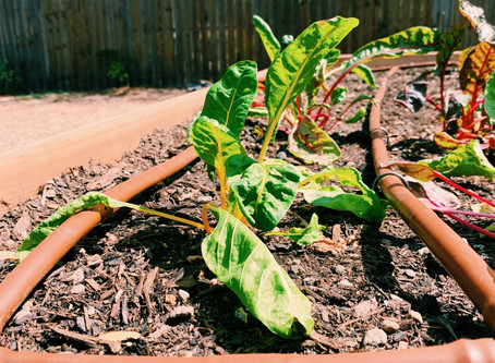 Opt for drip irrigation in flower and veggie beds