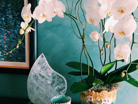 Purify your air with some indoor plants