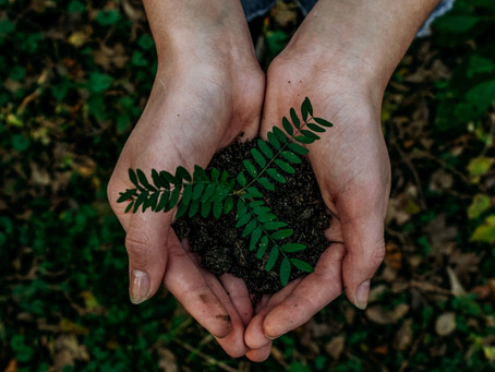 Get to carbon neutrality through carbon offsets