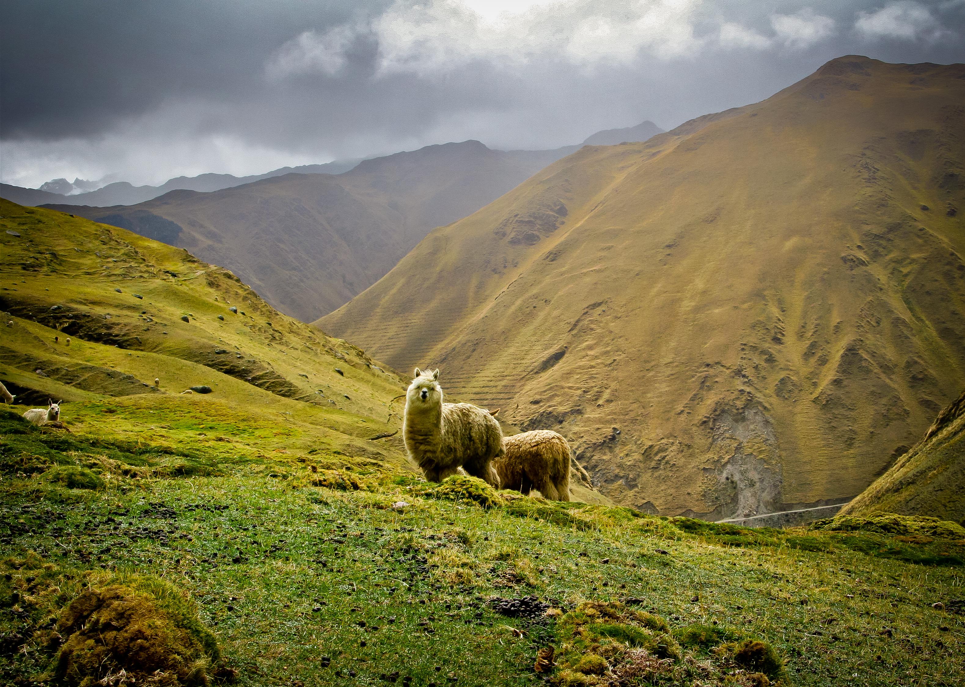 Lares Trek Peru