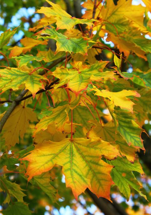 Autumn's here