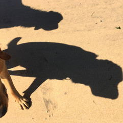 Shadow Hounds
