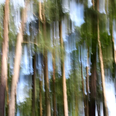 Swishy trees