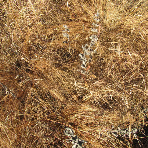 Fading prairie grass color
