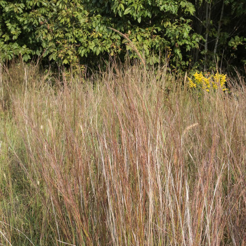 Prairie grasses turning colors