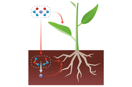 Transient Structures as Fertilizers