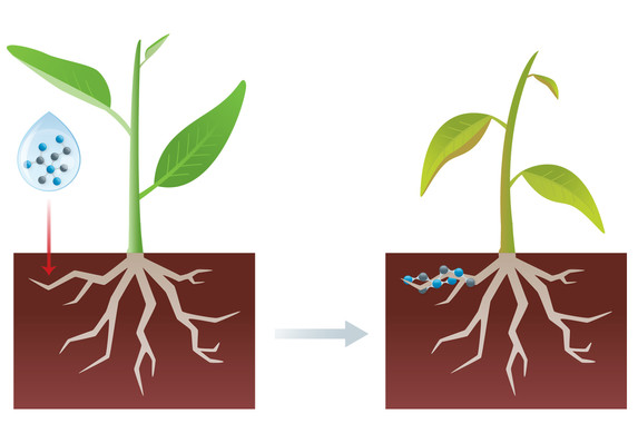 Polymers-Based Herbicides