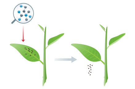 Polemeric Agents for Simultaneousily Feeding Crops