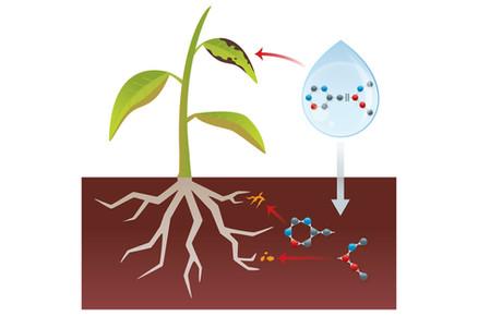 Transient Structures as Pesticides
