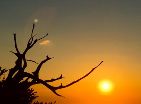 Owens Valley Part 5: Ancient Bristlecone Pine Forest