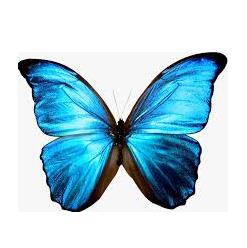 BlueButterflyt.png