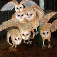 Surprise! Owls in a Barn.jpg