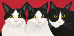 Turk, Atticus, Petsls