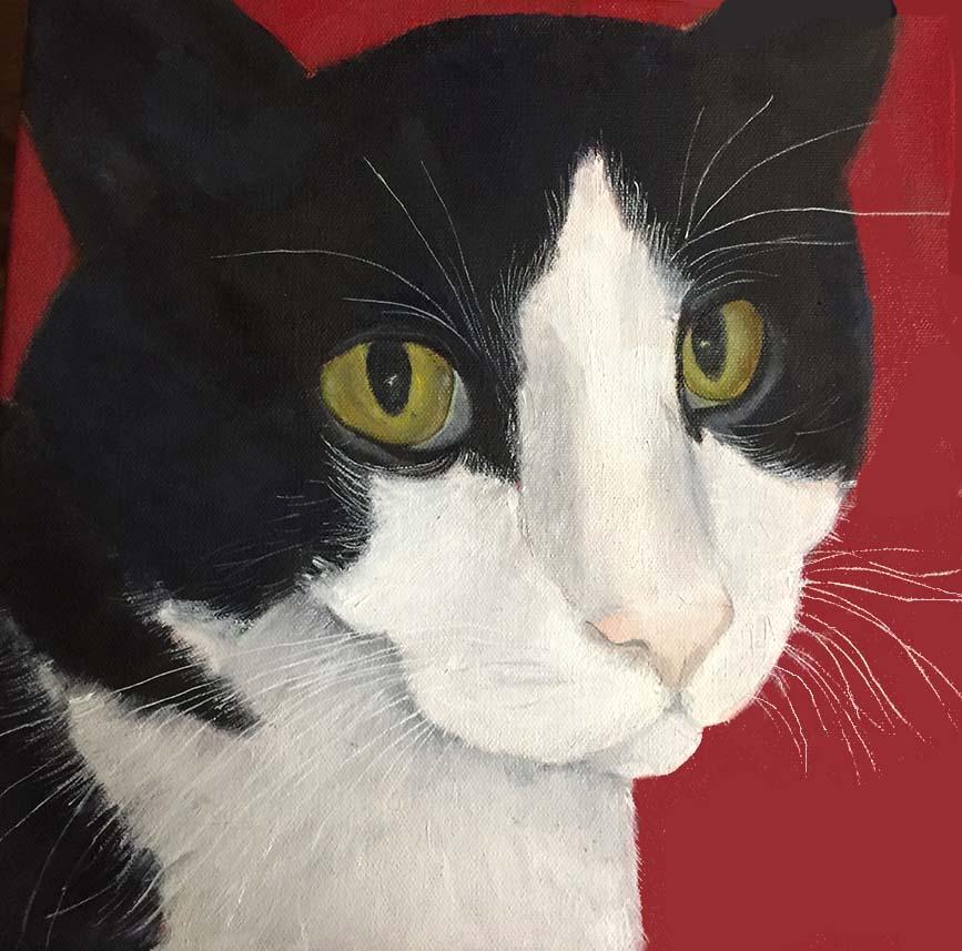 Mustka Carolinas cat