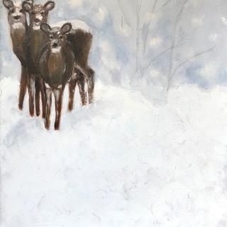 Mule Deer in the Snow