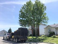 ADP Abattage d'arbres