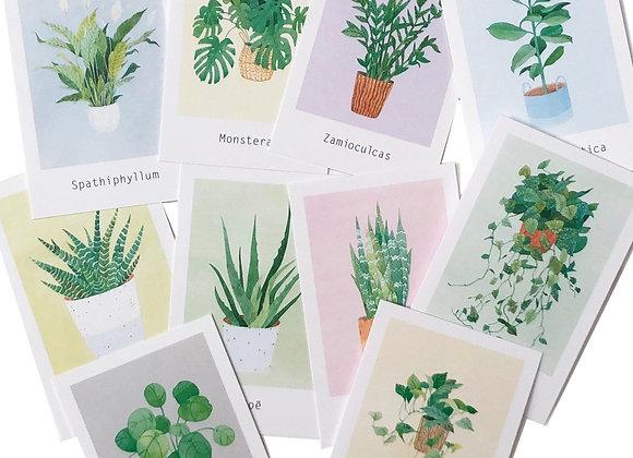 Набор открыток Plants for Friends