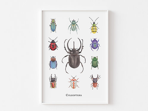 Insect Wall Art Print of Beetles