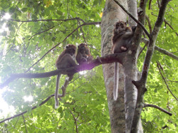 Wild Monkeys!