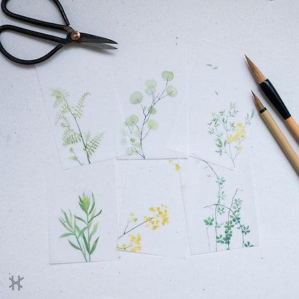Pack Notas vegetales