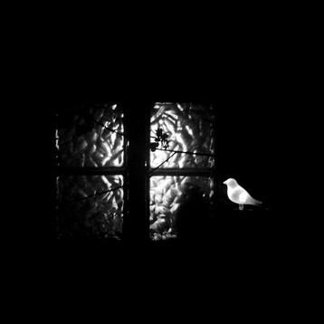 bird-in-window.jpg