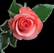rose_PNG637.png