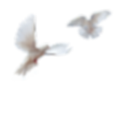doves (1).png