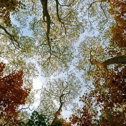 low-angle-photo-of-trees-3095293.jpg