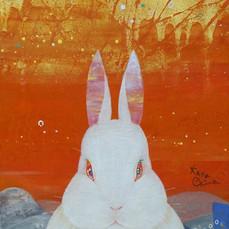 Awakened Rabbit