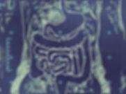 intestines_0_edited.jpg