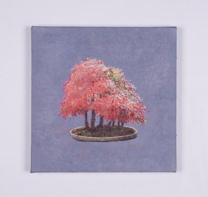 Bonsai #1