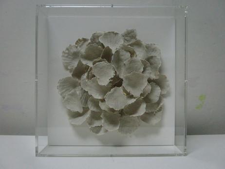Seashells #2