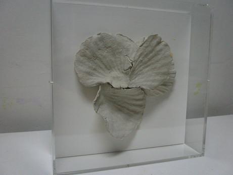 Seashells #1
