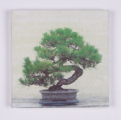 Bonsai #4