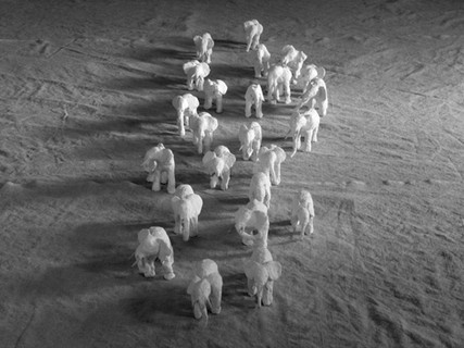 Migration #4