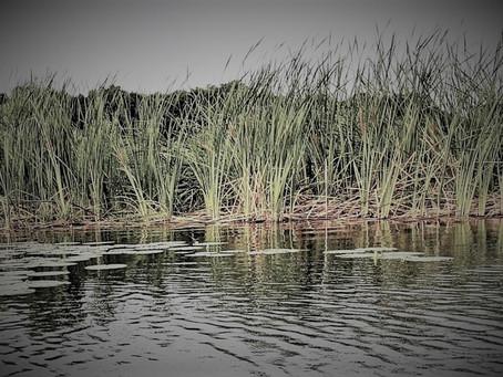 The Kit Lake Solace, April 2021