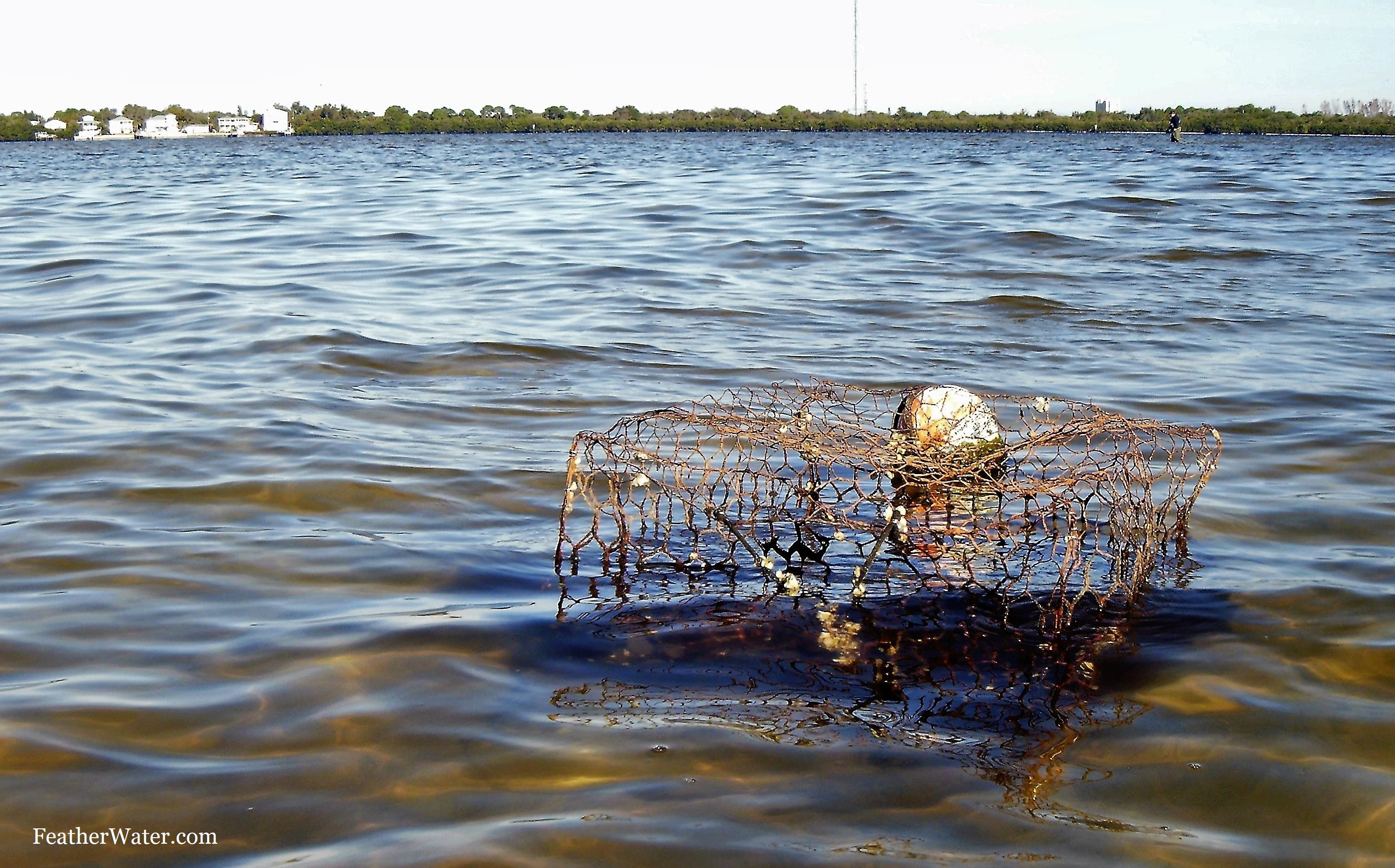 Crab Trap, Riviera Bay, Weedon Island