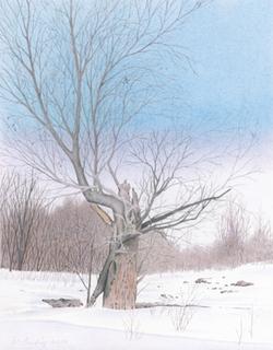Vieil arbre brisé / Old Tree Broken