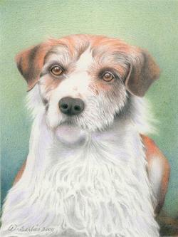 Petit chien / Little Dog