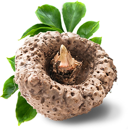 natural-konjac-foods-uk.png
