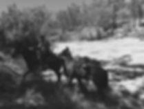 Packhorse and Lead.jpg