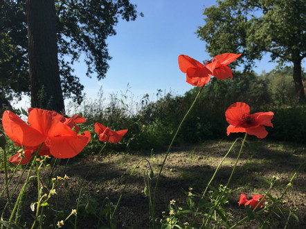 Bloemen in eigen tuin